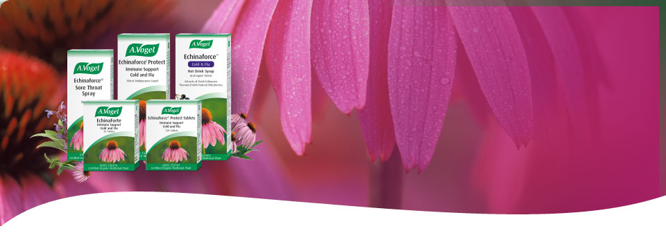 Combat colds & flu with the Echinaforce range